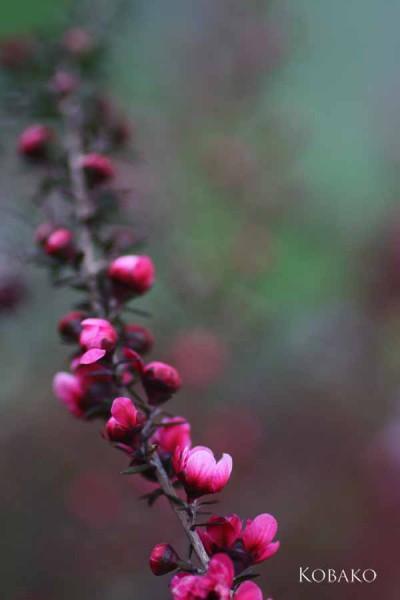 伸ばす-花