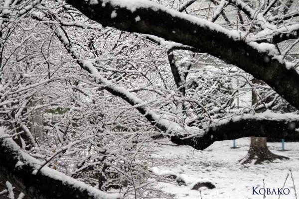 変な日雪1