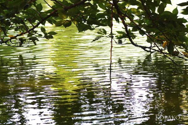 水面の写真