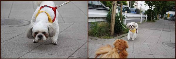 犬の決闘2