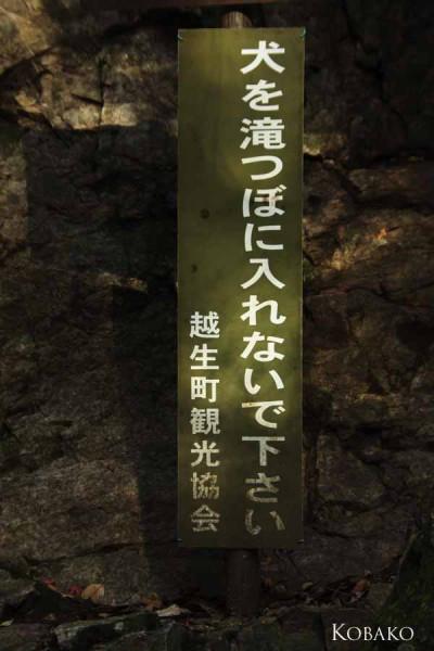 黒川三滝犬を滝つぼに